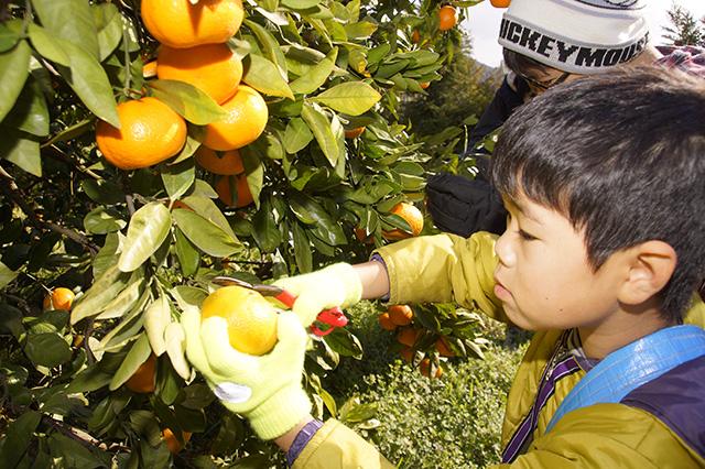 画像:食農教育の様子