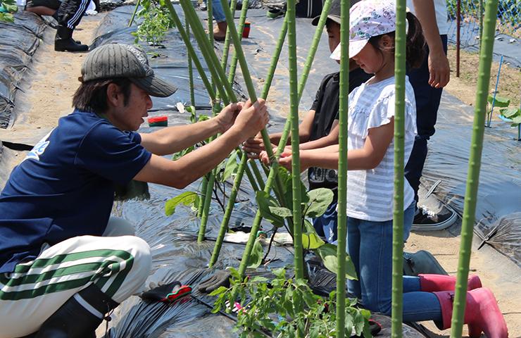 夏野菜の植え付けを学ぶ親子